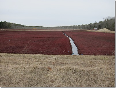 Shining Tides #5a Cranberry fields